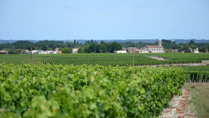 Médoc-Route-Des-Chateaux-23.jpg