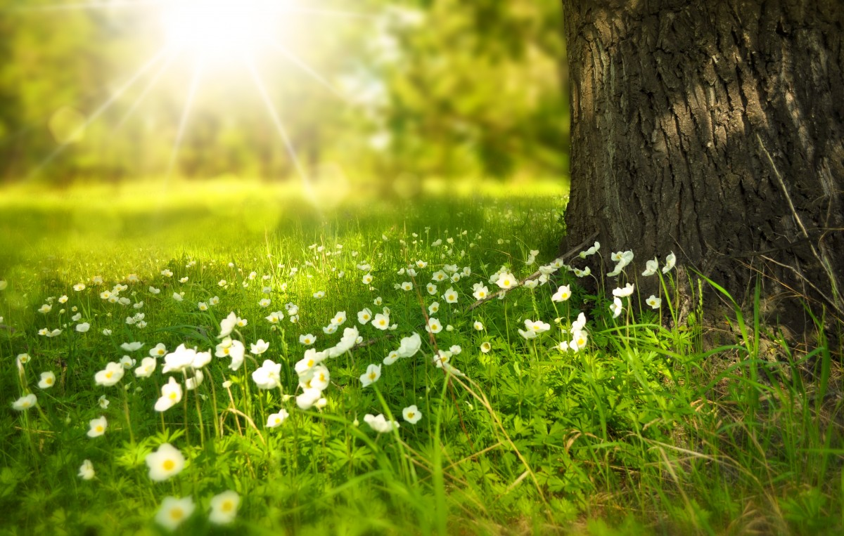spring_tree_flowers_meadow_wood_forest_sun_summer-985038